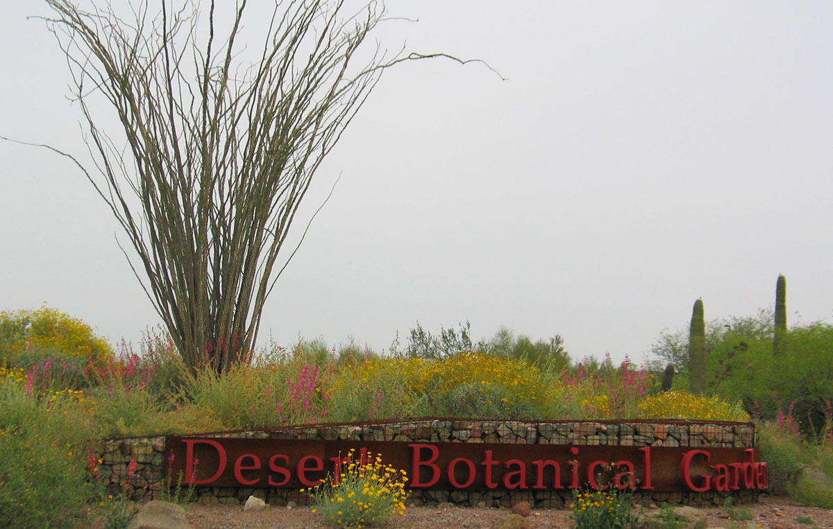"Photo of the entry to the Desert Botanical Garden. A low, curved gabion wall supports a long, low metal sign reading ""Desert Botanical Garden"". It is surrounded by a flowering naturalistic landscape."